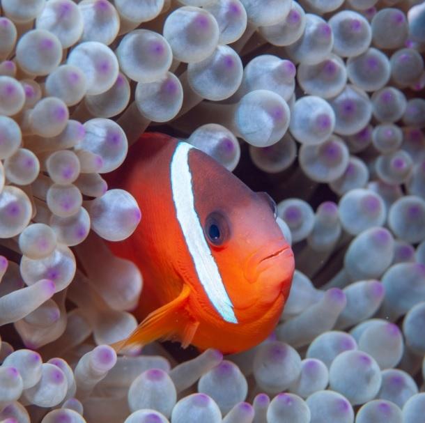 Da Indonésia à Amazônia - Expedições de Jean-Michel Cousteau